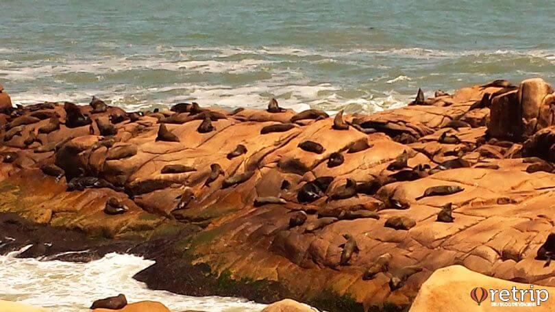 Leões Marinhos em Cabo Polonio