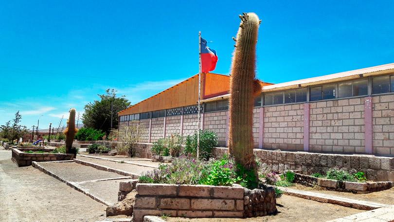 Cactos com 2 metros no Deserto de Atacama