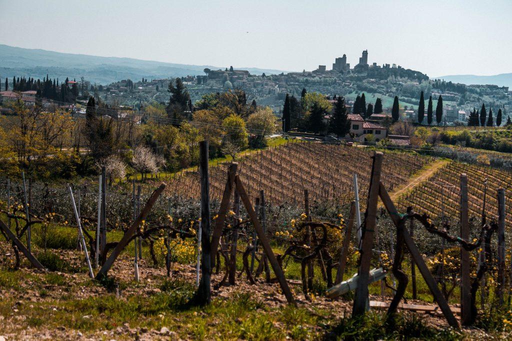 vinhedos patrimonios da unesco na Itália